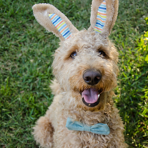 Easter Bodie