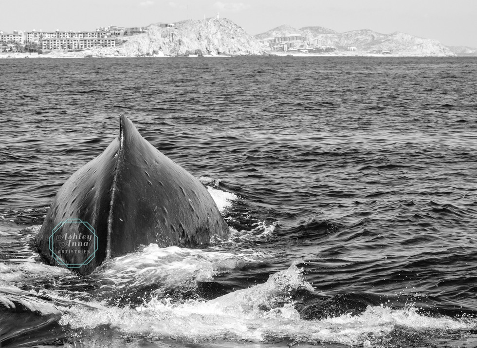 Cabo Humpback