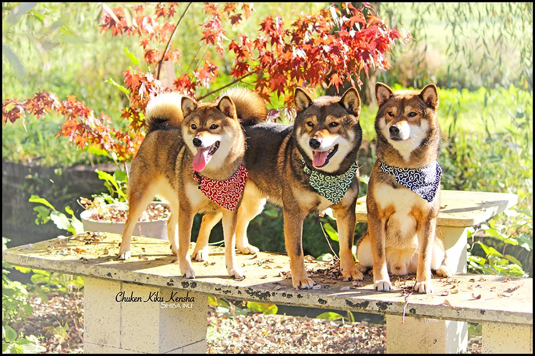 Sesame team