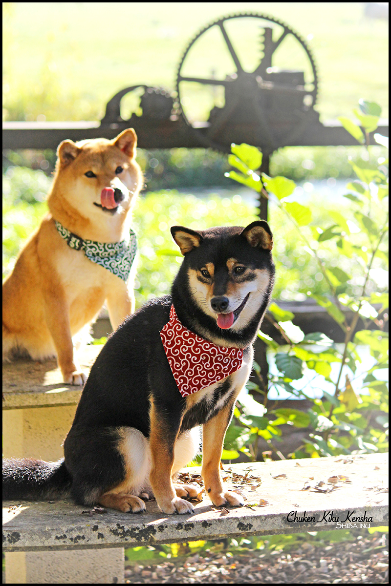 Kayo & Mabuki
