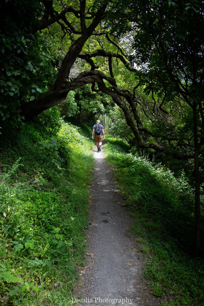 husband walking along Remutaka Incline through forest, Wairarapa walk