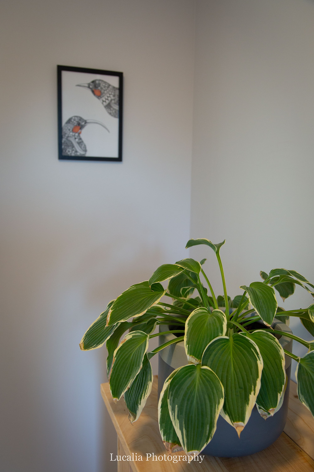 Wairarapa artist Angelique Hicks Huia drawing with plant