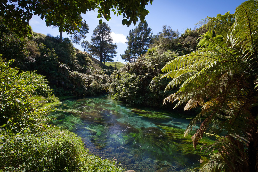 Blue Spring, Waikato, New Zealand, Lucalia Photography