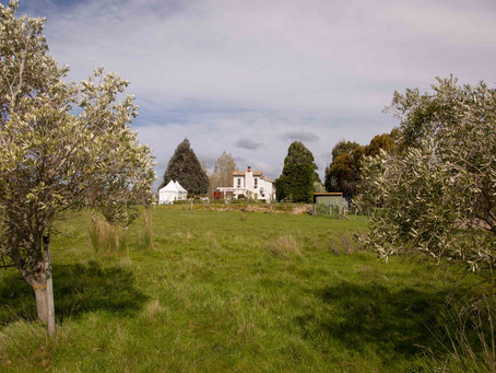 Martinborough wedding accommodation: Olivio~nor, Wairarapa