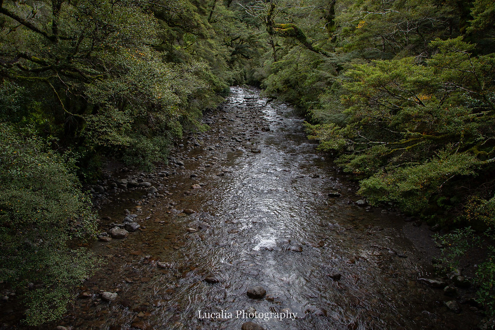 river with beech forest, Mt Holdsworth, Wairarapa, New Zealand