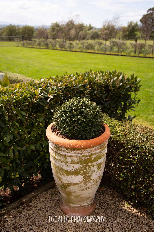 Tuscan terracotta topiary pot, wedding accommodation Olivio~nor, Martinborough Wairarapa