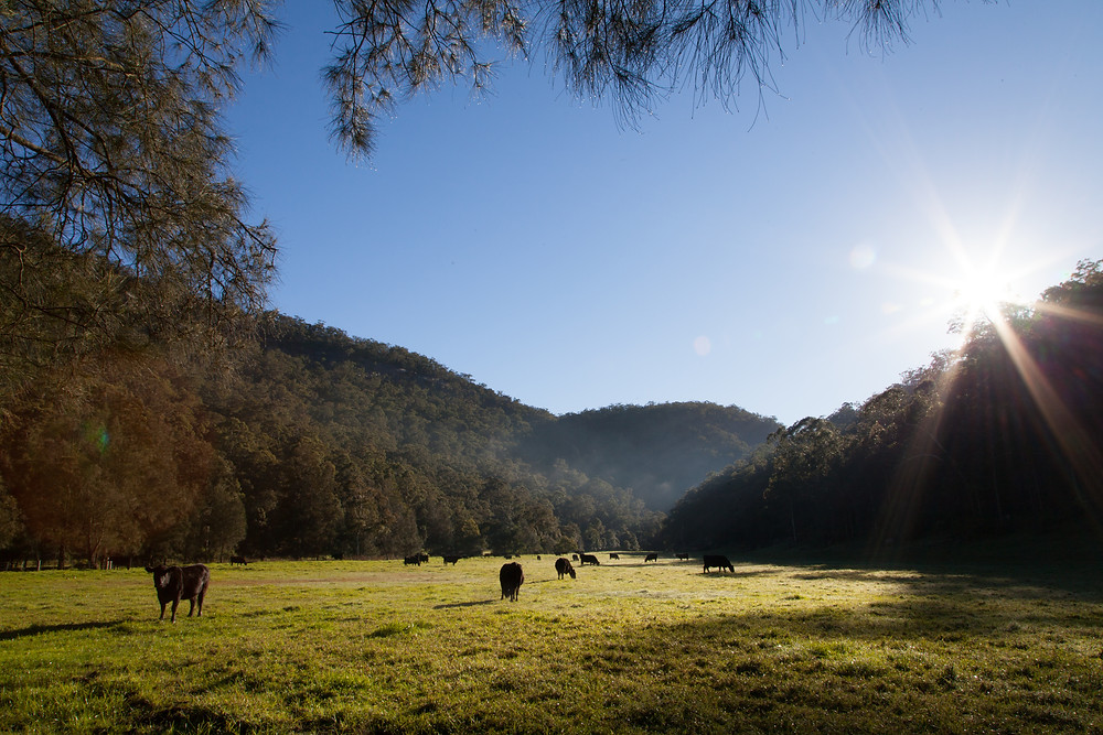 Sunrise over fields with cows and hills, Spencer NSW, Lucalia Photography