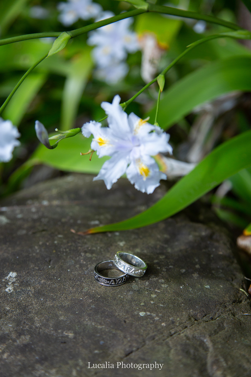wedding rings on a rock with natural flower and leaves, Wairarapa wedding photographer