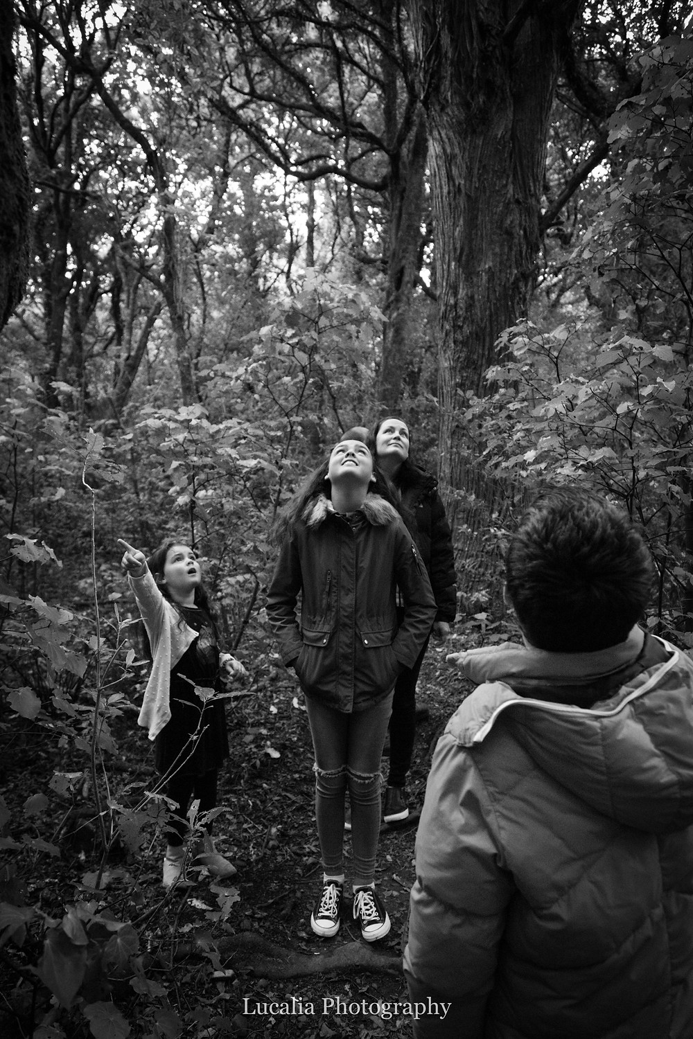 family loooking up in the forest, little girl pointing, Wairarapa family photographer