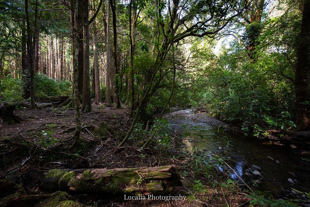 creek in the Tararua Ranges forest, Kiriwhakapapa Wairarapa wedding venue