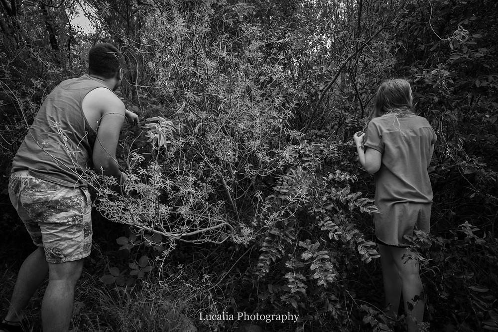 engaged couple picking blackberries, Featherston Wairarapa