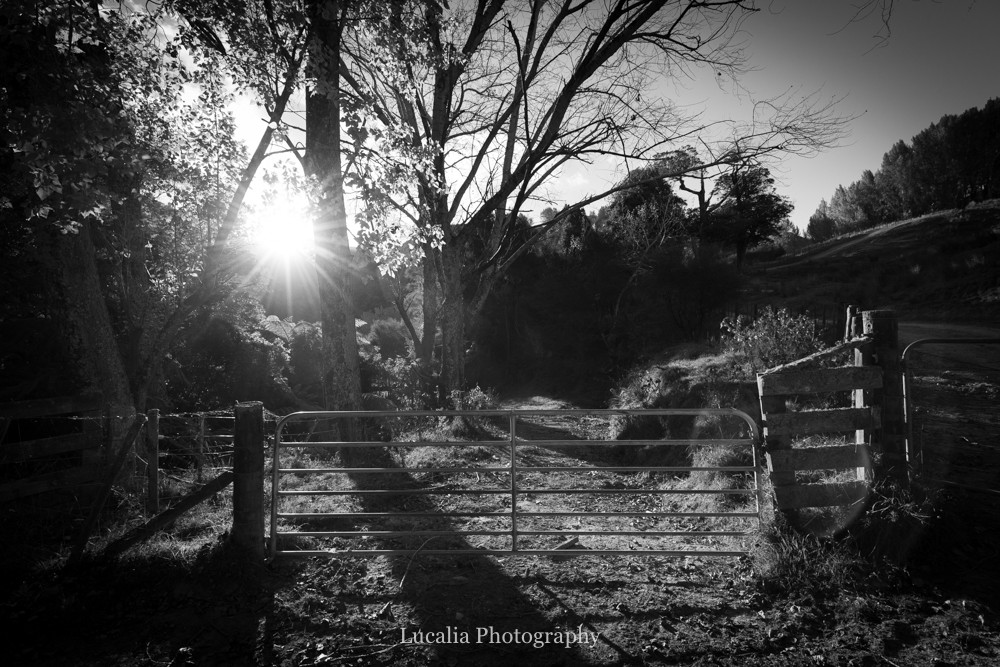 setting sunlight through trees and farm gate High Peaks Farm Stay, Mangamahu, Manawatu-Wanganui, New Zealand