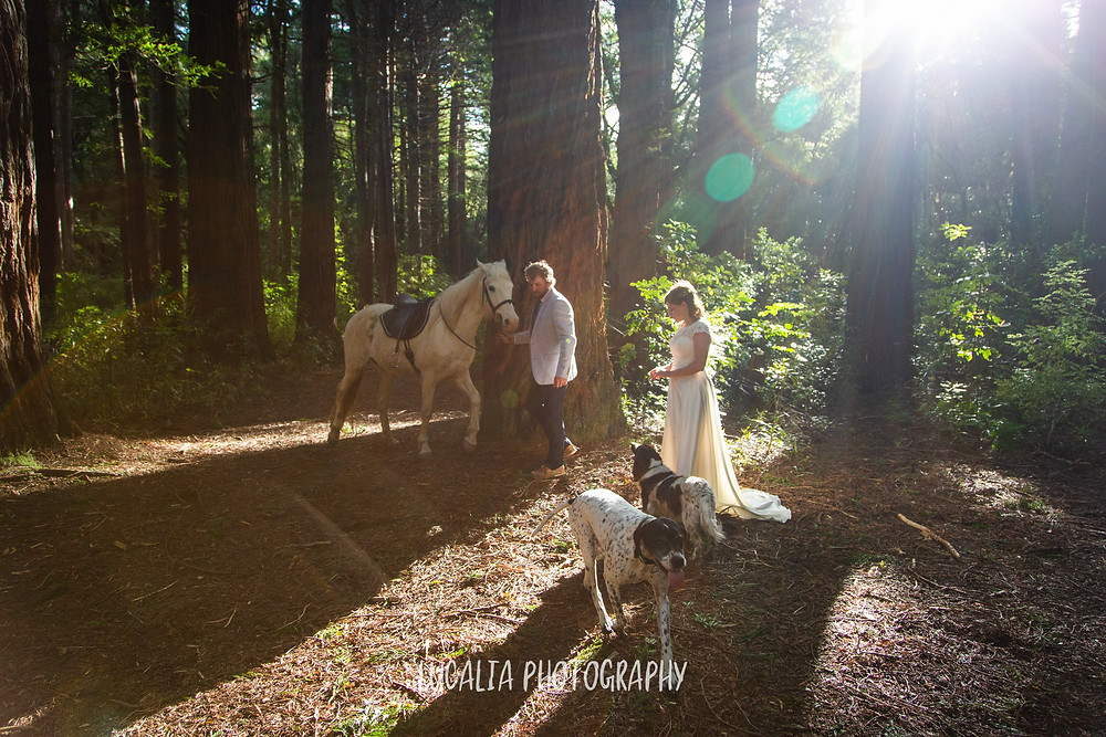 bride and groom with horse and two dogs in sunny forest, Kiriwhakapapa Wairarapa wedding photographer