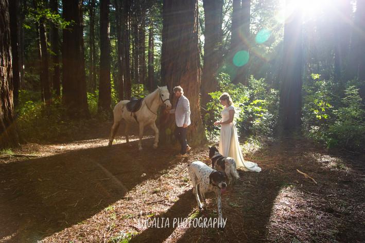 Lucalia Photography Wairarapa Wedding Photographer-7755.jpg