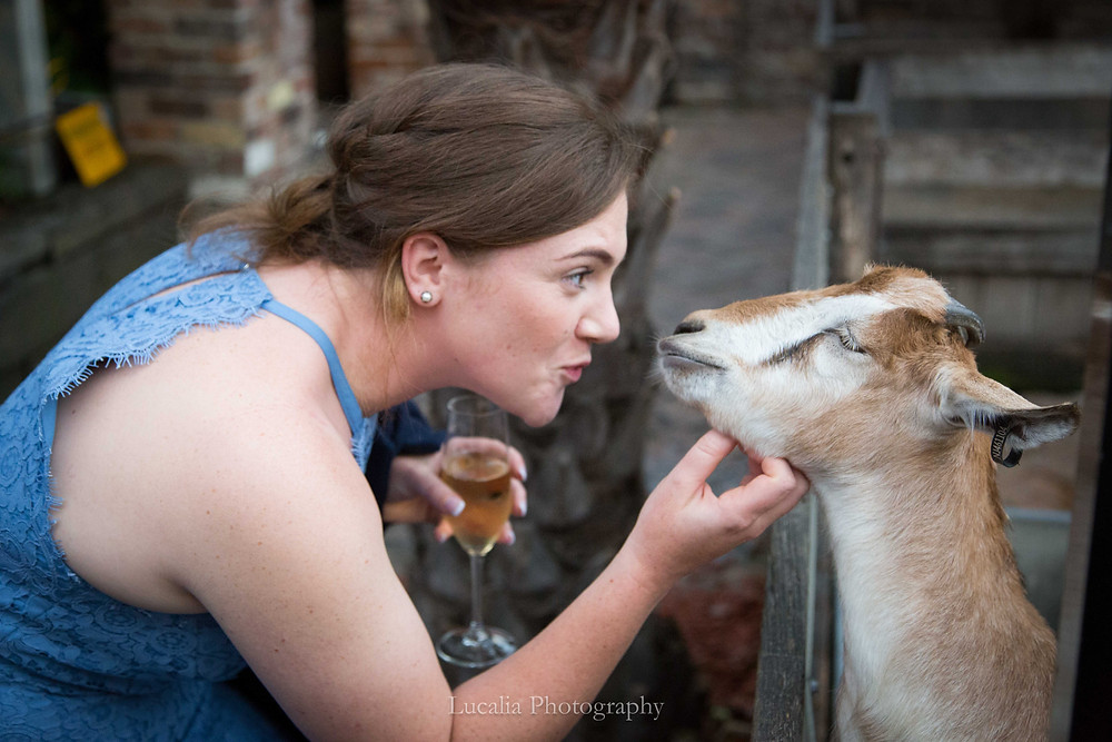 wedding guest with a glass of champagne scratching a goat under the chin