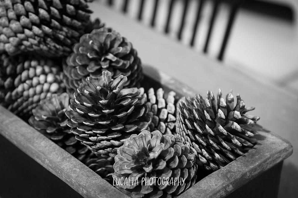 pinecones in a timber bowl, wedding accommodation Olivio~nor, Martinborough Wairarapa