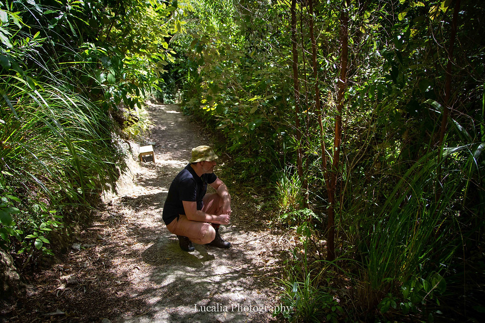 a man crouched down on a path talking to birds in the forest, Wairarapa photographer