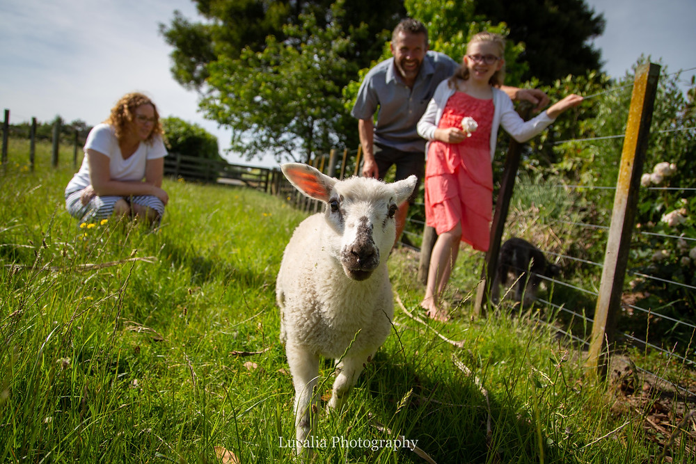 mother, father and daughter with a lamb, Wairarapa family photographer