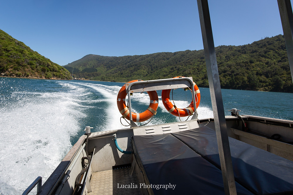 boat leaving the forested inlet, Wairarapa photographer