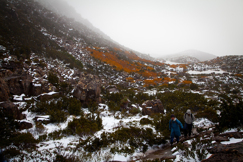 hikers walking away from turning fagus, Tarn Shelf, Mt Field National Park, Tasmania, Australia