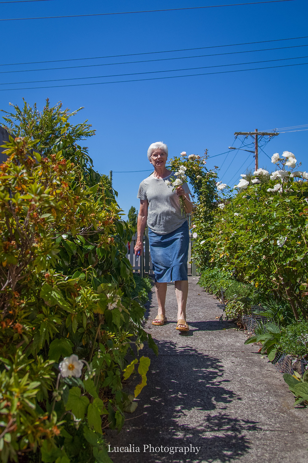 mum walking down the garden path surrounded by white roses, Wairarapa wedding photographer