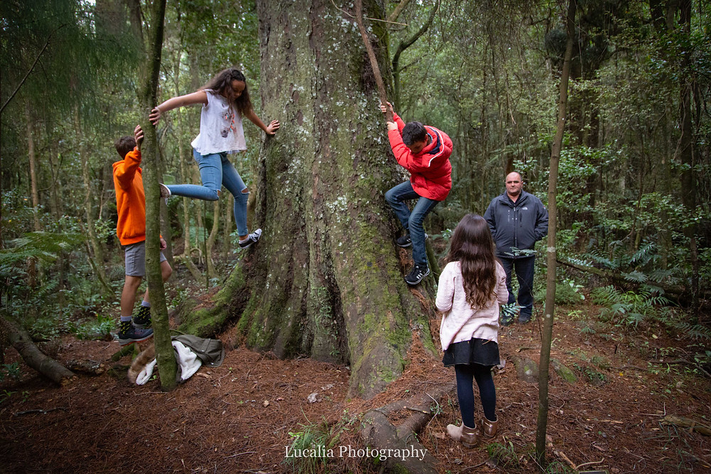 children climbing a tree with dad, Wairarapa family photographer what to wear