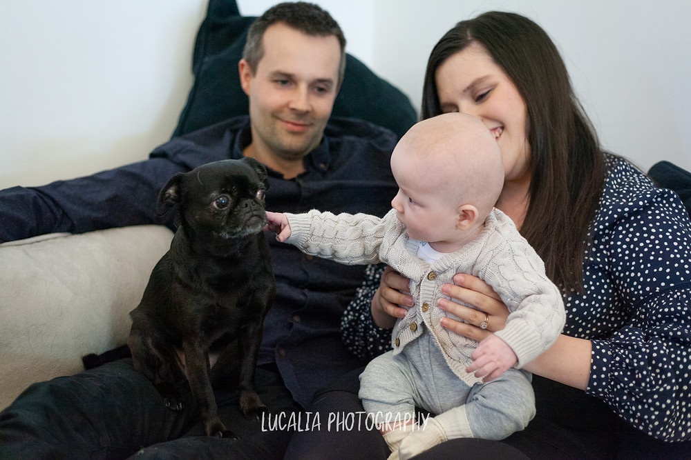 baby held by mum, patting black dog with dad smiling, Mount Holdsworth, Wairarapa family photographer