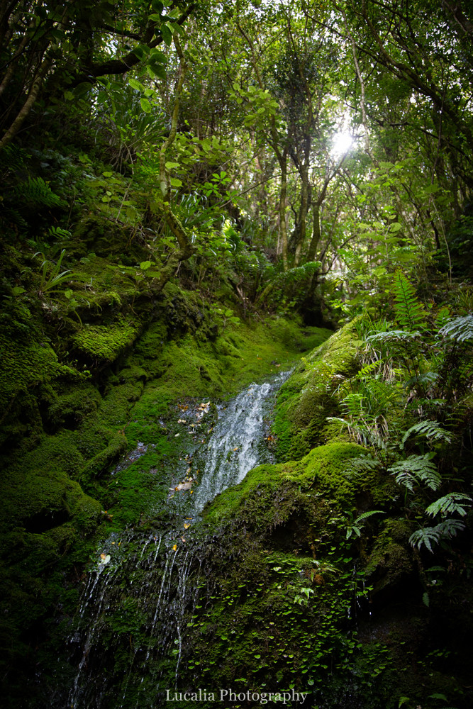 waterfall, New Zealand native forest, Remutaka Incline, Wairarapa walk