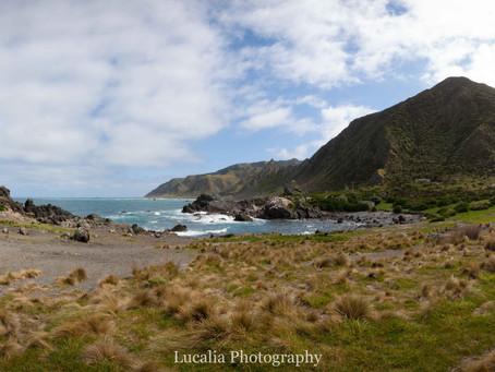 Sea Views, Seals and Breathtaking Landscapes: Cape Palliser, Wairarapa