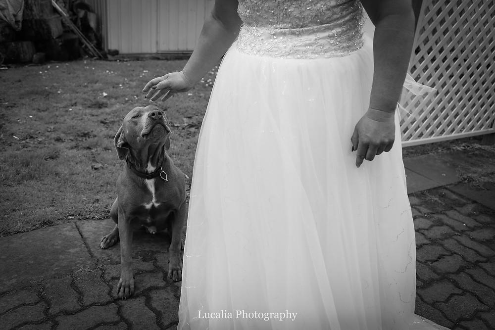 bride and her dog, Wairarapa wedding photographer