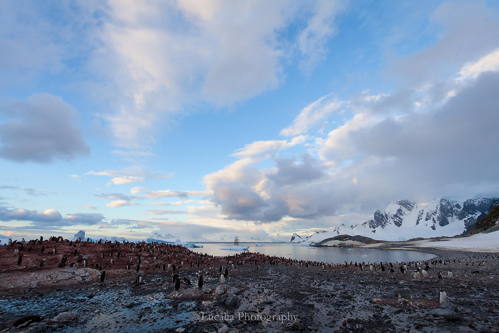 A wide landscape photograph of a bay with the tall ship Bark Europa in the centre. There are many Gentoo penguins in the foreground.