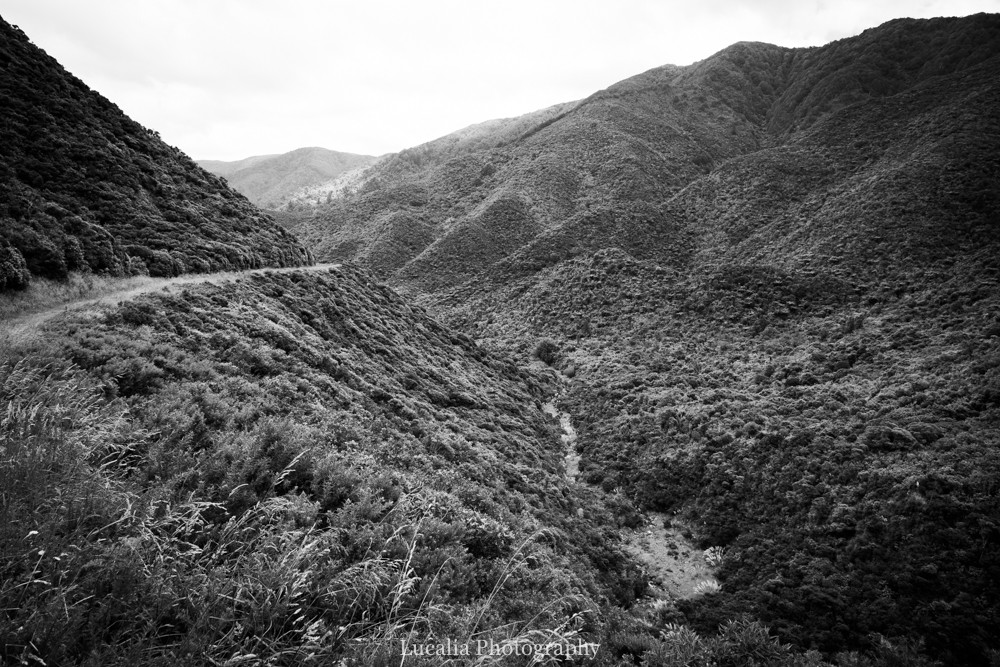 Remutaka Incline, forest covered mountains, Wairarapa walk