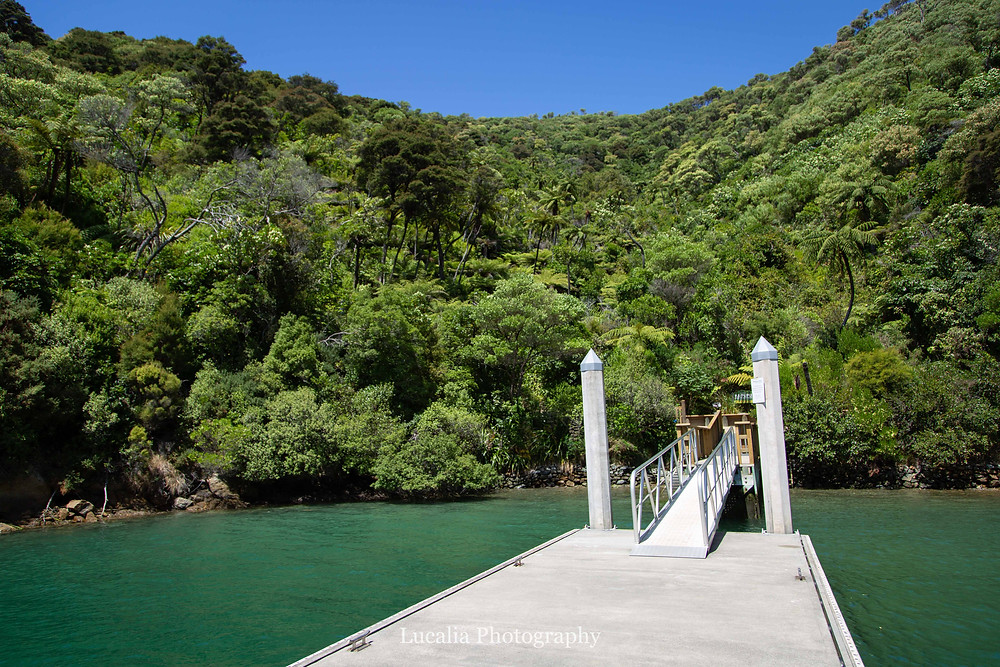 jetty leading up to densly forested vallery and blue sky, Wairarapa photographer