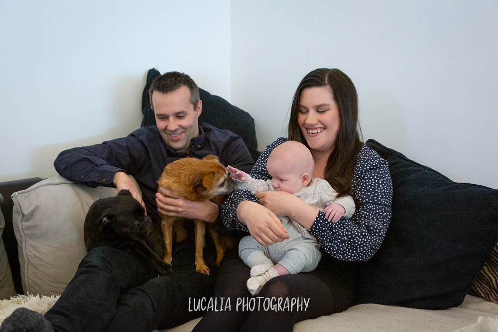 family with baby sitting on couch patting two small dogs, Mount Holdsworth, Wairarapa family photographer