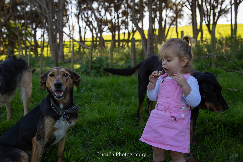 little girl eating a snack with dogs on a farm, Wairarapa family photographer