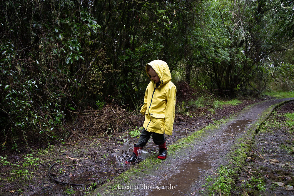 boy in yellow rain coat and gum boots splashes in a puddle in a forest, Wairarapa family photographer