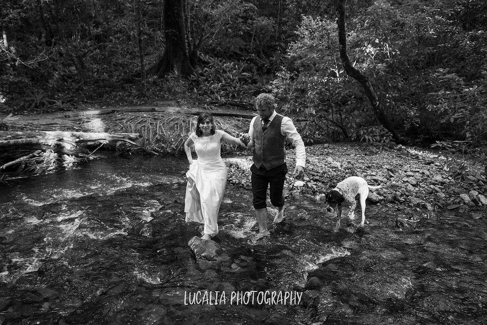 groom helping bride walk across a river with dog, Kiriwhakapapa Wairarapa wedding photographer