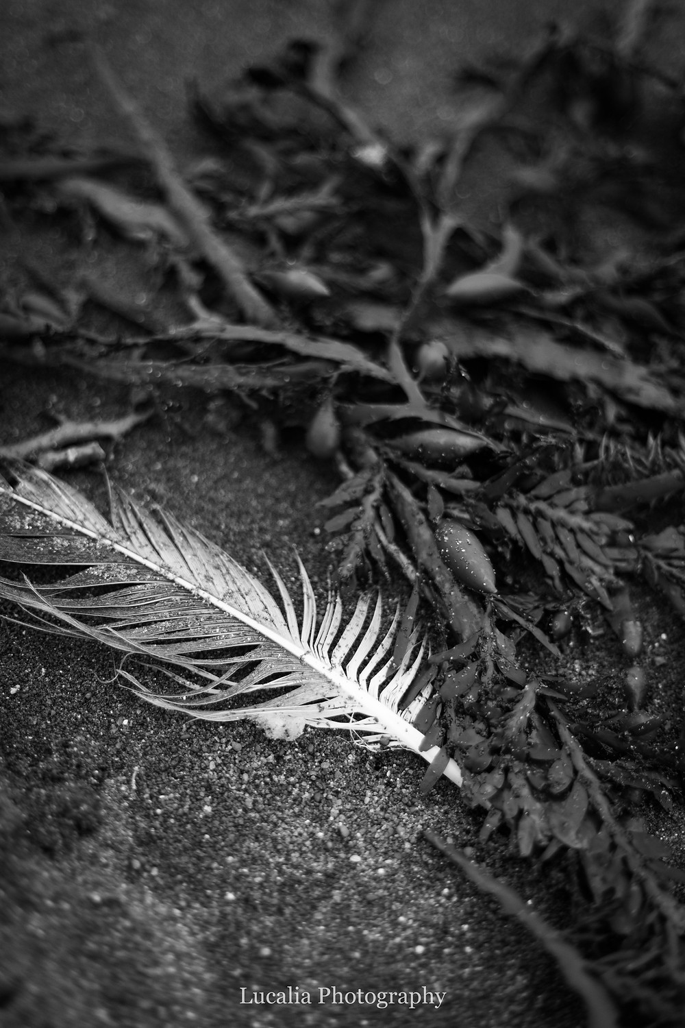 feather and seaweed at White Rock, Wairarapra
