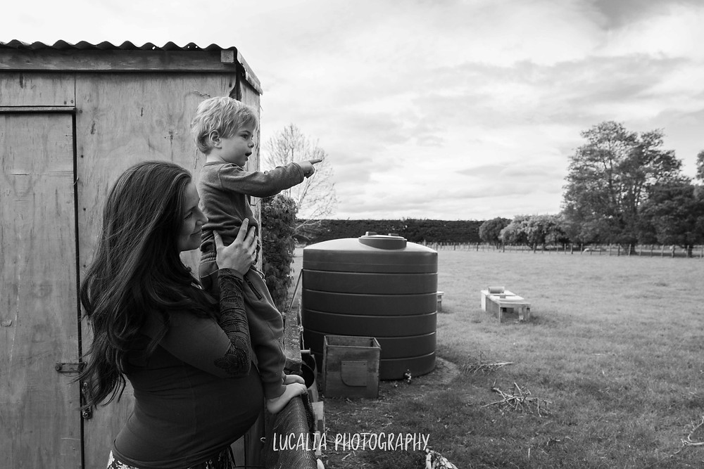 pregnant mum holds son up to fence pointing at animals, Wairarapa maternity photographer