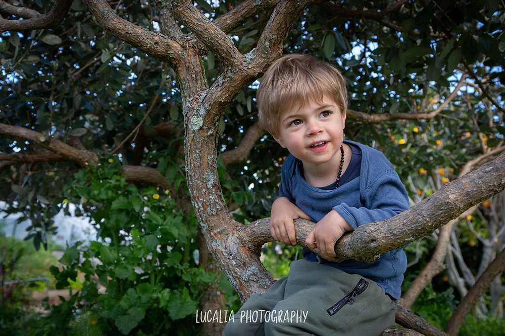 young boy smiles whilst sitting in a tree, Wairarapa maternity photographer