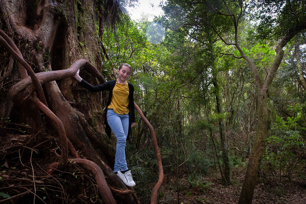 girl climbing down a tree in a forest, Waiohine Gorge, Wairarapa family photographer