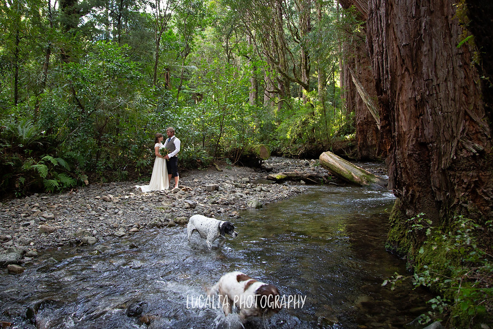 wedding couple embracing on riverbank with two dogs, Kiriwhakapapa Wairarapa wedding photographer