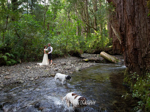 The forest wedding photos of Pip and Josh: Kiriwhakapapa, Wairarapa