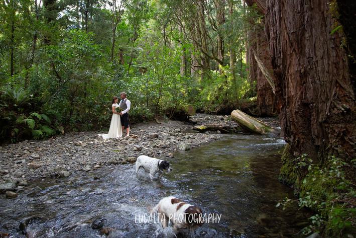 Lucalia Photography Wairarapa Wedding Photographer-7988.jpg
