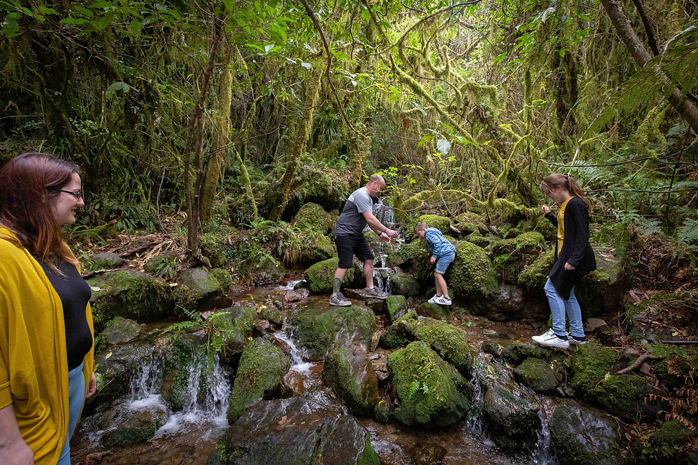 family walking in a waterfall forest Waiohine Gorge, Wairarapa family photographer