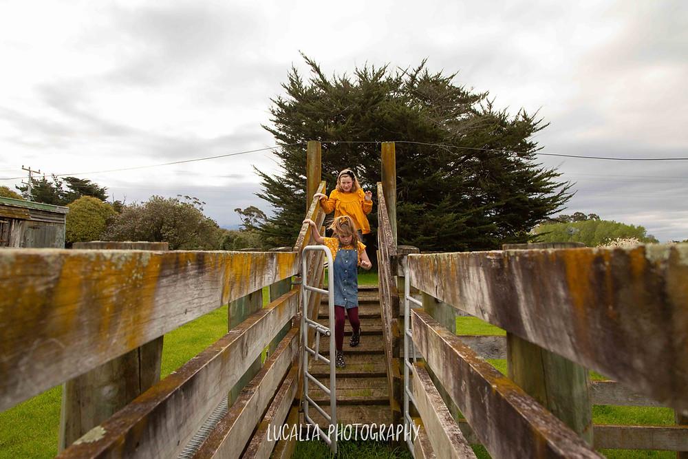 children playing in sheep pen, Wairarapa wedding photographer