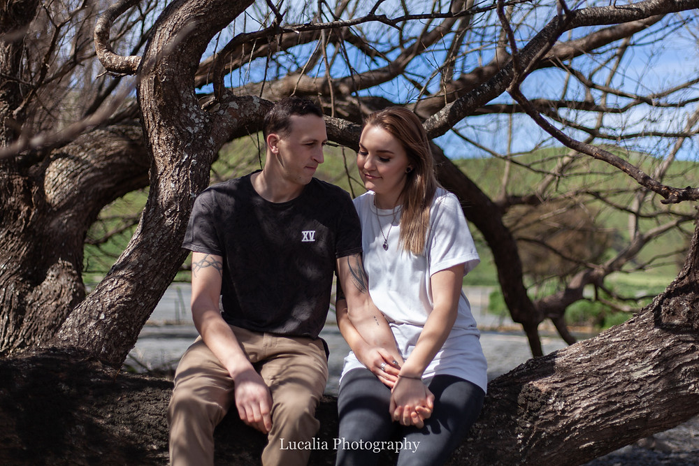 engaged couple sitting in a tree holding hands, Wairarapa wedding photographer