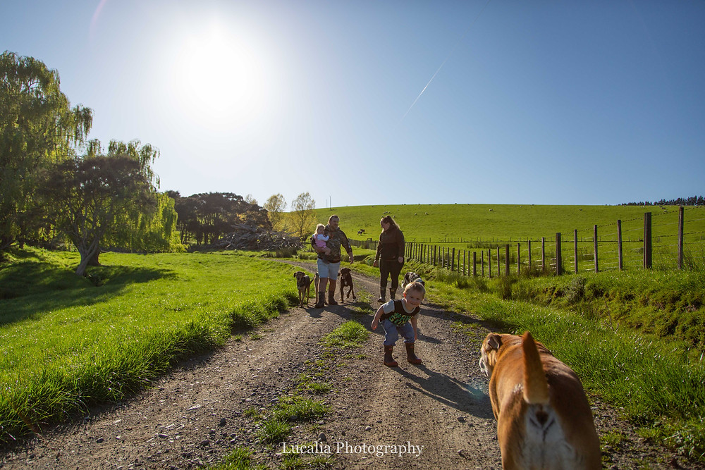 family walking down a gravel road with dogs, Wairarapa family photographer