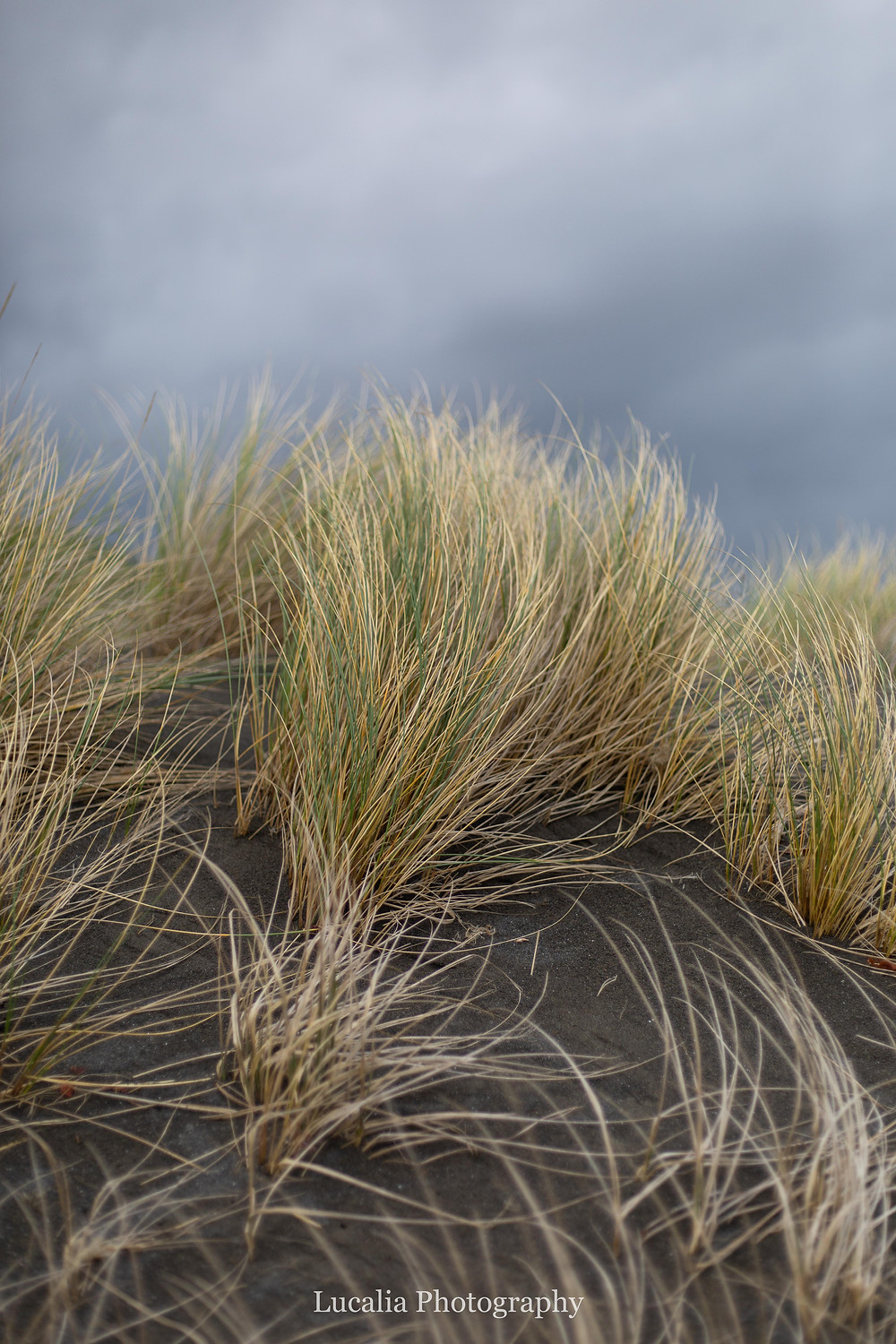 blacks and tussock grass and grey clouds at White Rock, Wairarapra