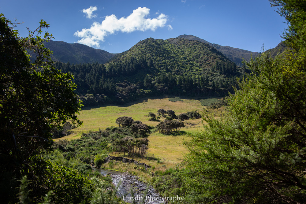 Forest covered mountains, fields, river, trees, Remutaka Incline, Wairarapa walk
